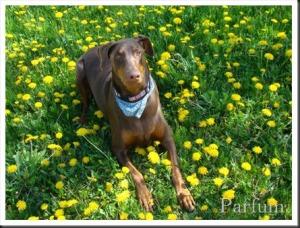 Bella-mai-2009-2_thumb.jpg