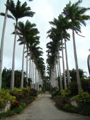 Barbados 119